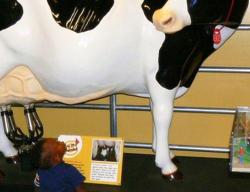 big plastic cow