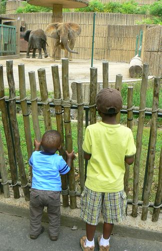 boys watching elephants at the zoo