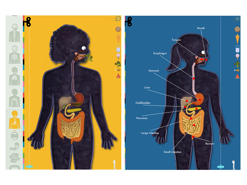 Human Body iPad App